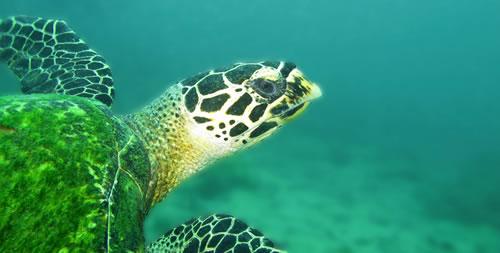 Diving in Pattaya 1